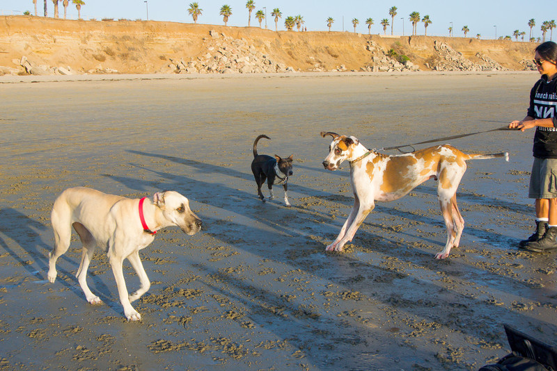 dogs_beach-74.jpg