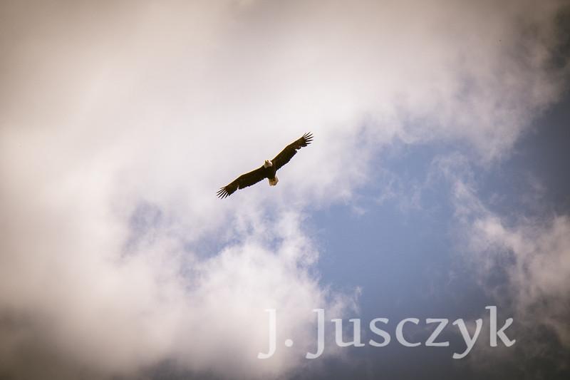 Jusczyk2021-6834.jpg