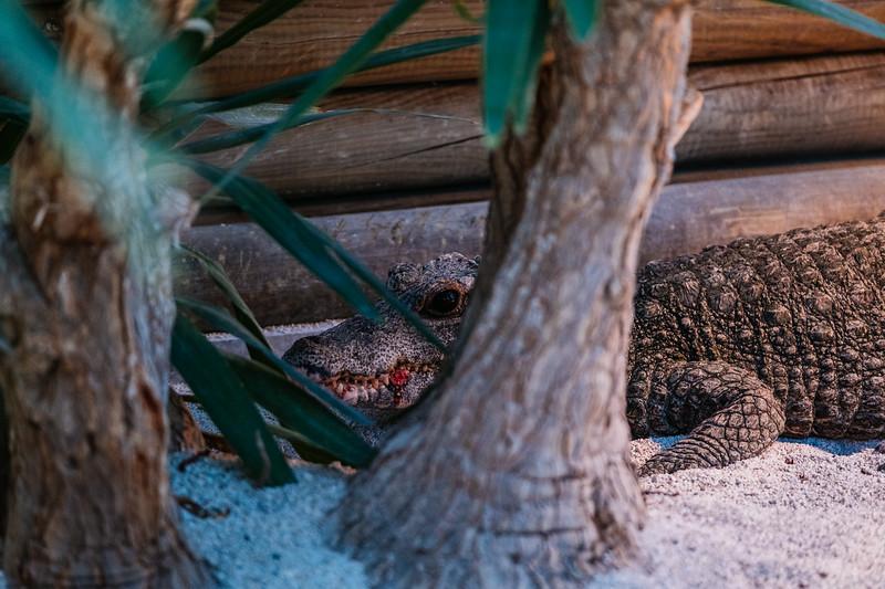 Tonis Zoo-0572.jpg