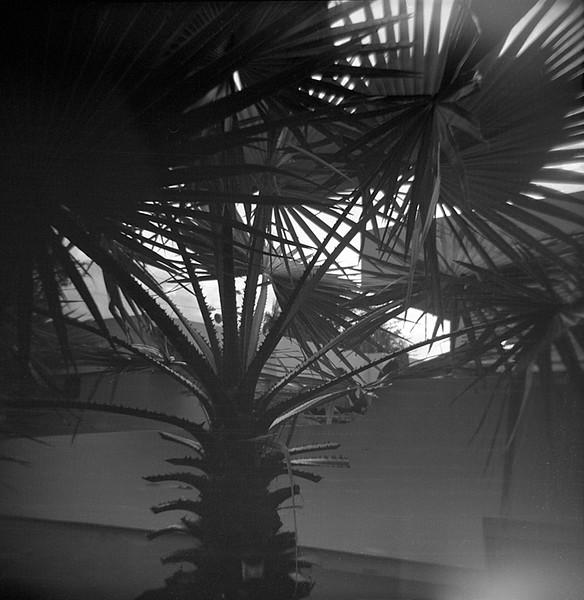 04_palmetto_tree.jpg