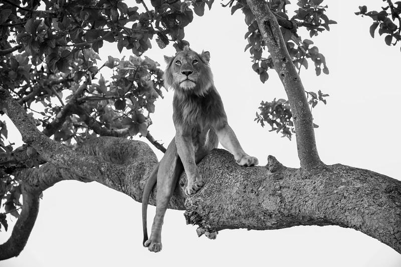 Uganda_T_QE-740.jpg
