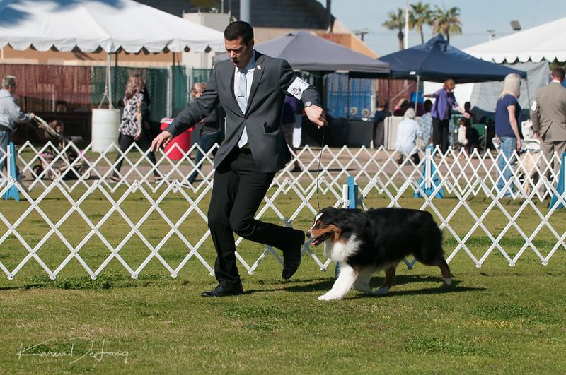 20170205_Australian Shepherds_Lost Dutchman Kennel Club-40.jpg