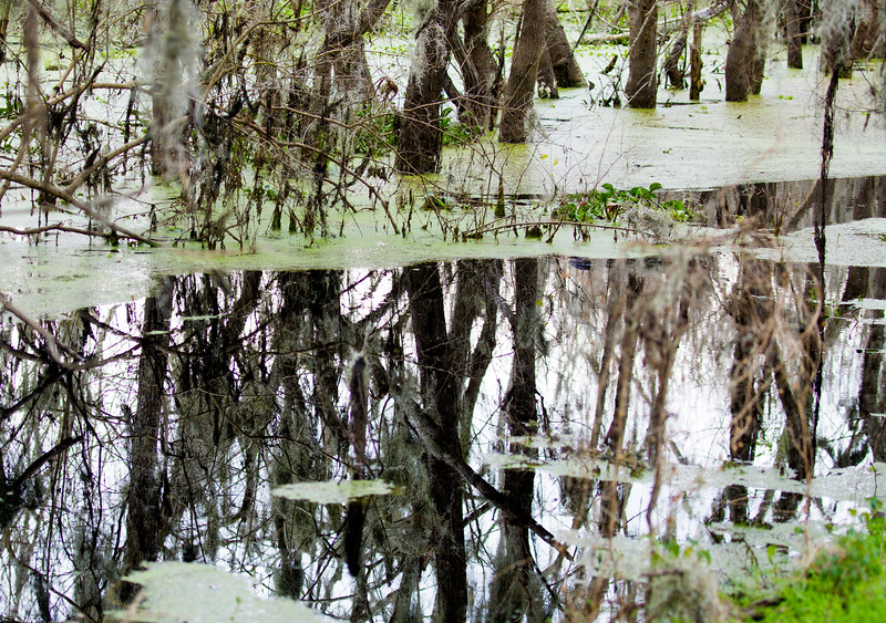 The still, reflecting swampwaters surround us.