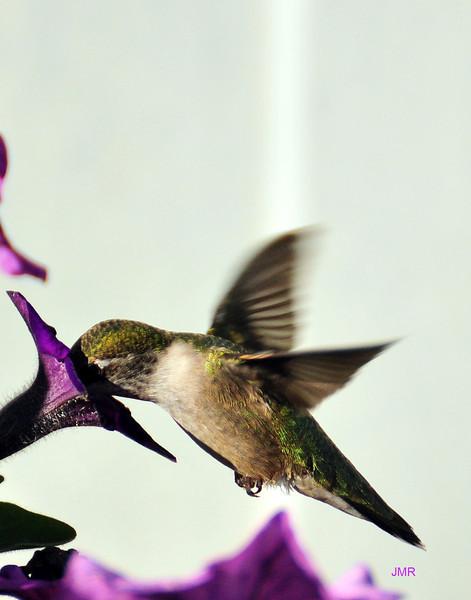 Flower hummer .jpg