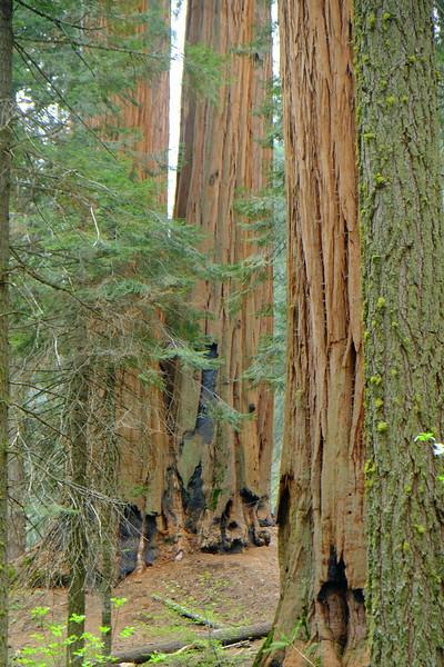 California Day 6 Sequoia 05-30-2017 78.JPG