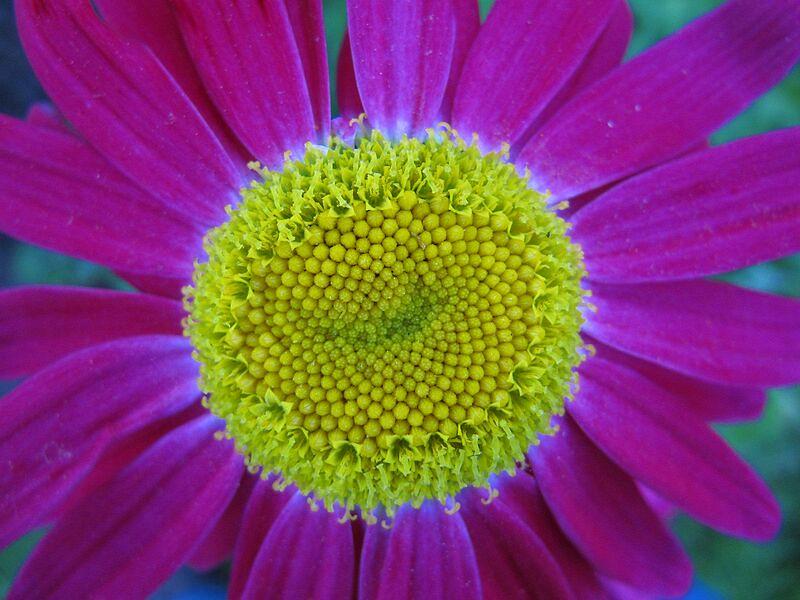 garden-2009-06-0720_std.jpg