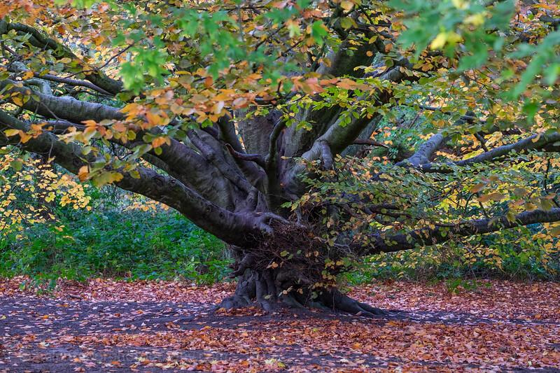 Valley Gardens Oct 18-61.jpg