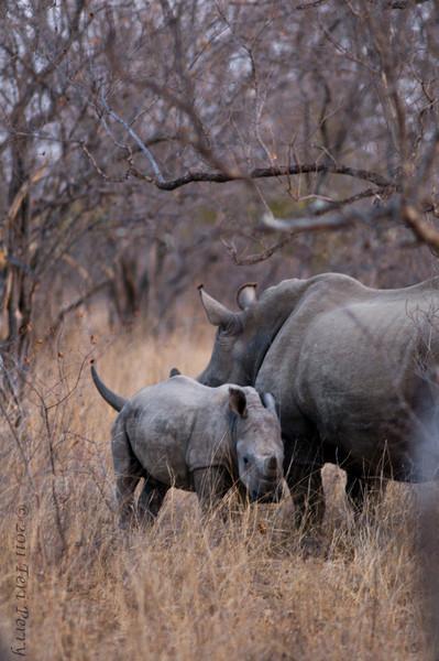rhino family (1).jpg