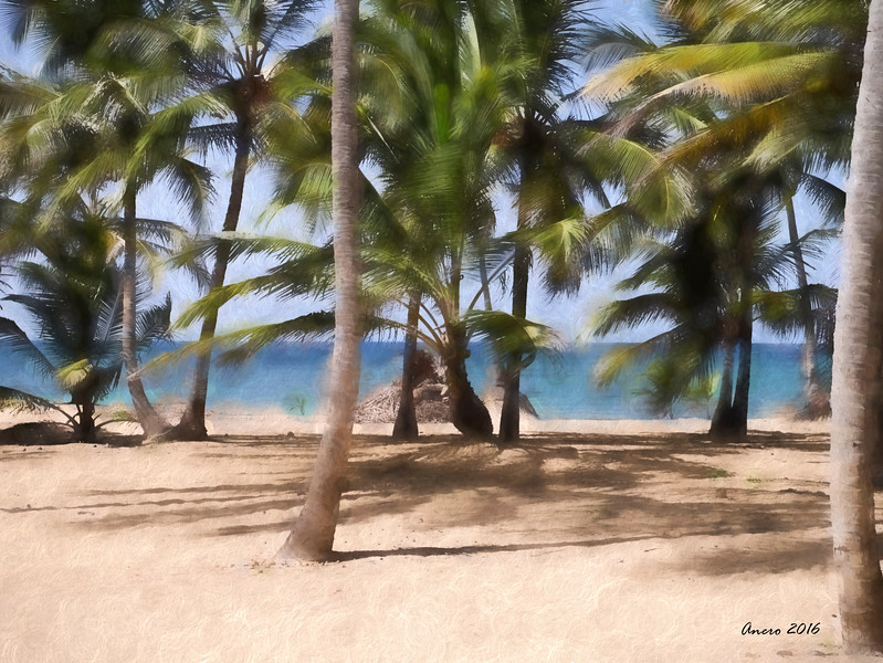 coconut trees on beach
