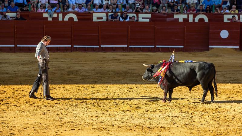 Bullfighting H6.jpg