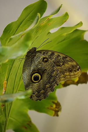 Butterfly_4.jpg