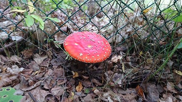 Mushrooms 2017