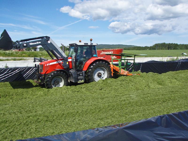 Grashøsting-11