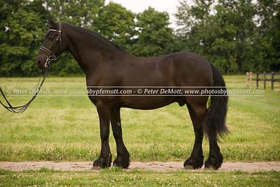 Jen Truett Dancing Horse Farm