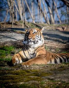 2019 04 Bronx Zoo