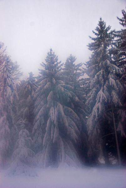 Soft snow pine .jpg