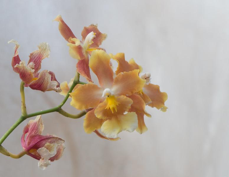 Flowers-23.jpg