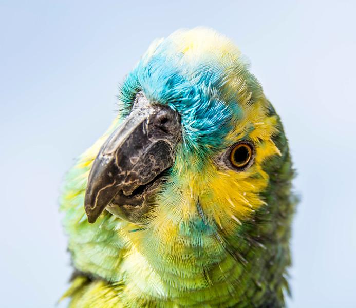 Parrots-1.jpg