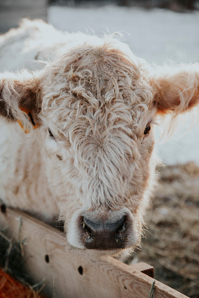 Prairie Beef
