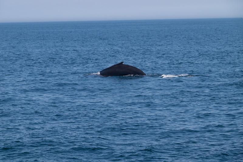 humpbacks-6287.jpg