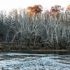 Dogwoods Along the Shenandoah