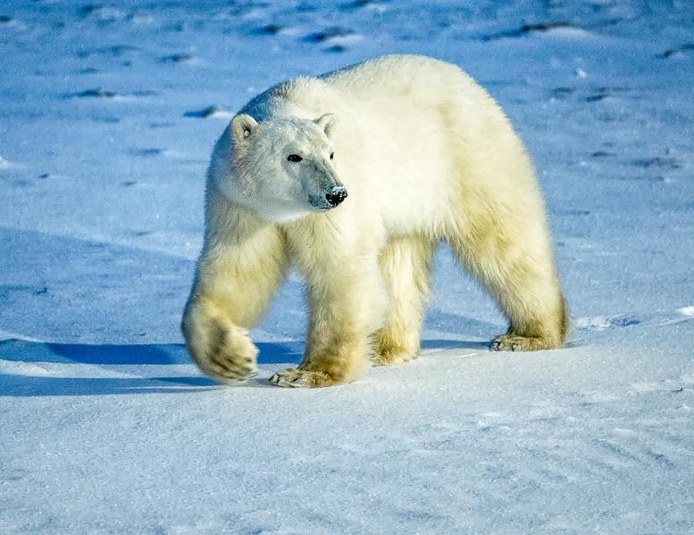 Bear Churchill 2015 -1.jpg