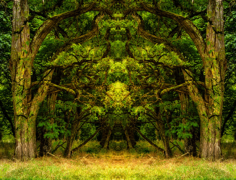 Natures Mandalas