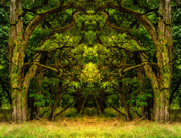 Portals to the Faery Forest