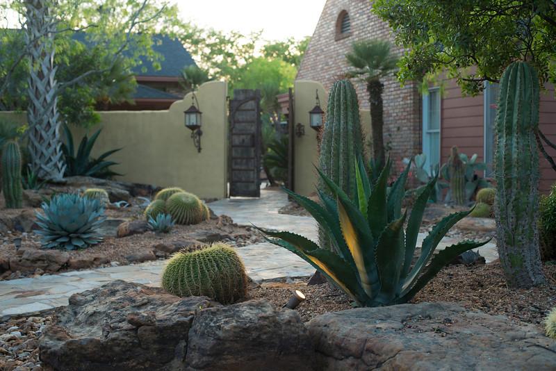 htx-cactus-space025.jpg