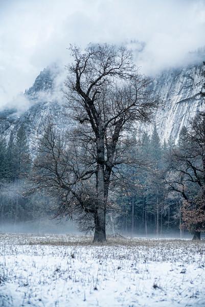 20141213_Yosemites_3075.jpg