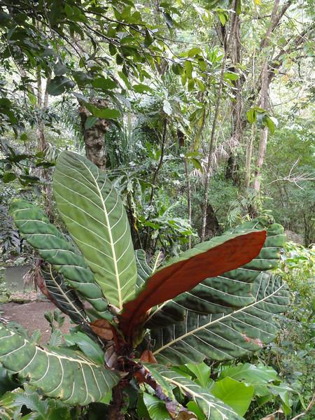 Oahu Hawaii 2011 - 119.jpg