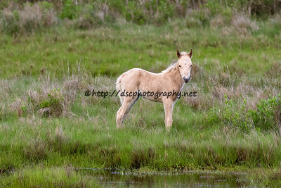 Goldie's Filly