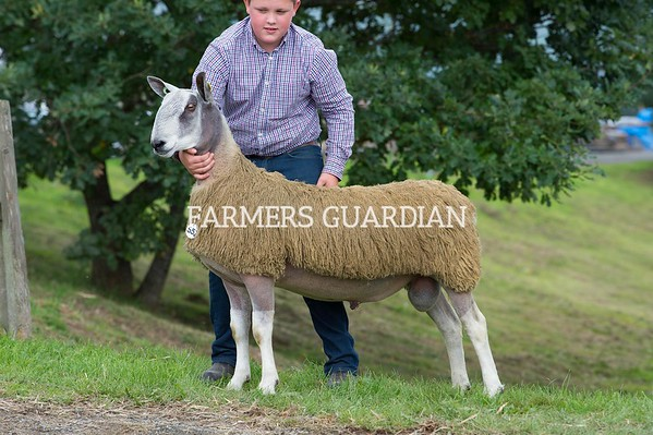 Builth Ram Sales Sept 2018