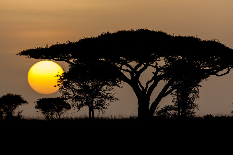 Sunrise on the Serengeti<br /> Image is Copyrighted - Do NOT use without permission.