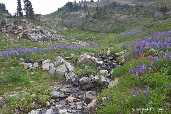 Mt. Rainier NP - Chinook Pass -- Naches Loop Hike (August 2013)