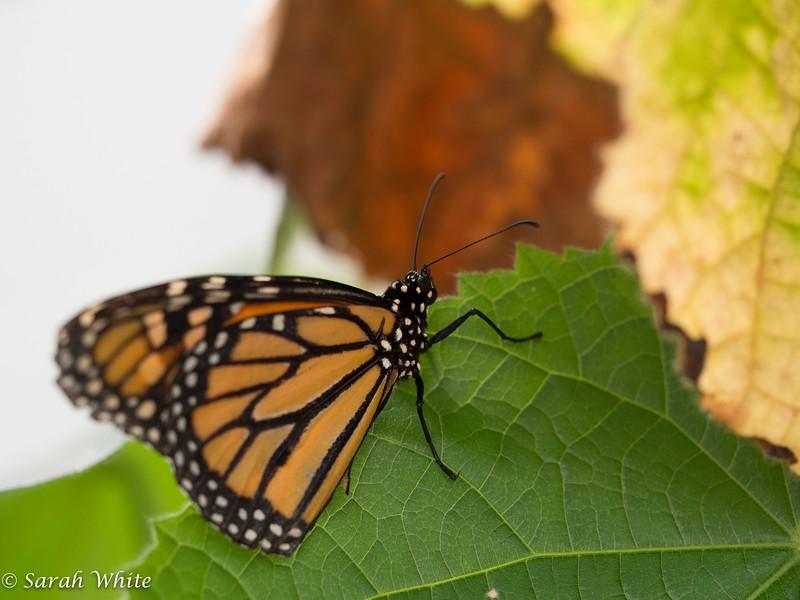 140503_ButterflyHouse_365.jpg