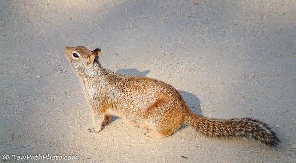 Chipmunk & Squirrel