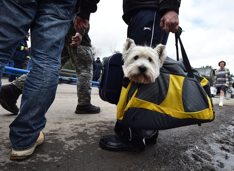 ". A man carries a dog after after they have been evacuated from their flooded house in the town of Obrenovac, 40 kilometers west of Belgrade, on May 17, 2014. Deadly floods across Bosnia and Serbia have claimed at least 14 lives and led to the evacuation of 15,000 people after the Balkans suffered its heaviest rainfall in a century, officials said today. In Serbia, ""rescuers have started recovering dead bodies from flooded areas, but we will not make the number public before the complete withdrawal of the water,\"" Prime Minister Aleksandar Vucic told reporters. More than 15,000 people have been evacuated from a number of towns throughout Serbia, hit by what Vucic called \""a horrible natural catastrophe.\""  (ANDREJ ISAKOVIC/AFP/Getty Images)"