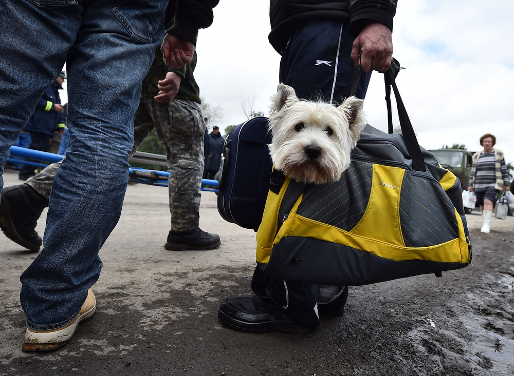 Description of . A man carries a dog after after they have been evacuated from their flooded house in the town of Obrenovac, 40 kilometers west of Belgrade, on May 17, 2014. Deadly floods across Bosnia and Serbia have claimed at least 14 lives and led to the evacuation of 15,000 people after the Balkans suffered its heaviest rainfall in a century, officials said today. In Serbia,