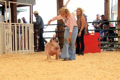 Market Swine 9