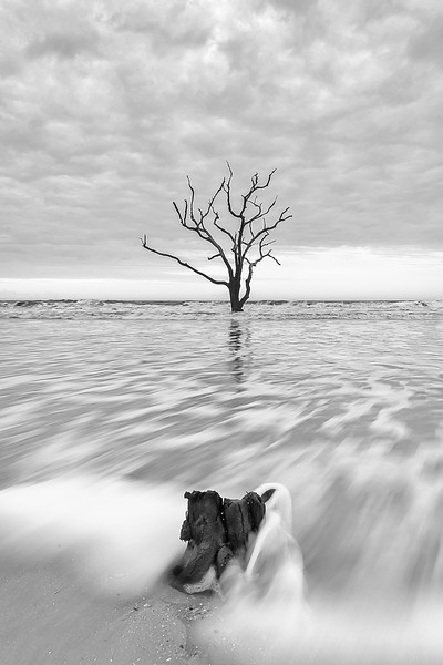 Tree and stump3-1.jpg