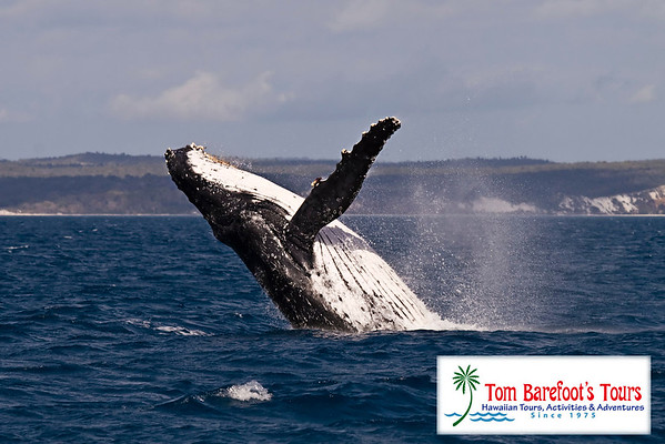 1029 Kona Sub and Whale Watch Combo