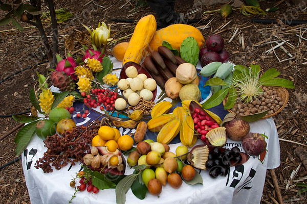 hothouse ,field crops, orchard - חממות .מטעים  וגידולי שדה