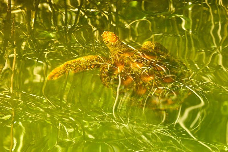 Psycehedlic Turtle