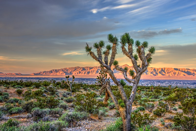 Joshua-Tree-Pahrump4-Beechnut-Photos-rjduff.jpg