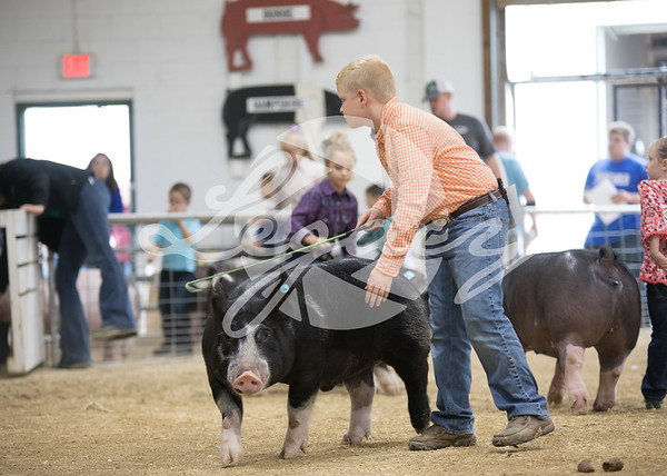 National Barrow Show CPS