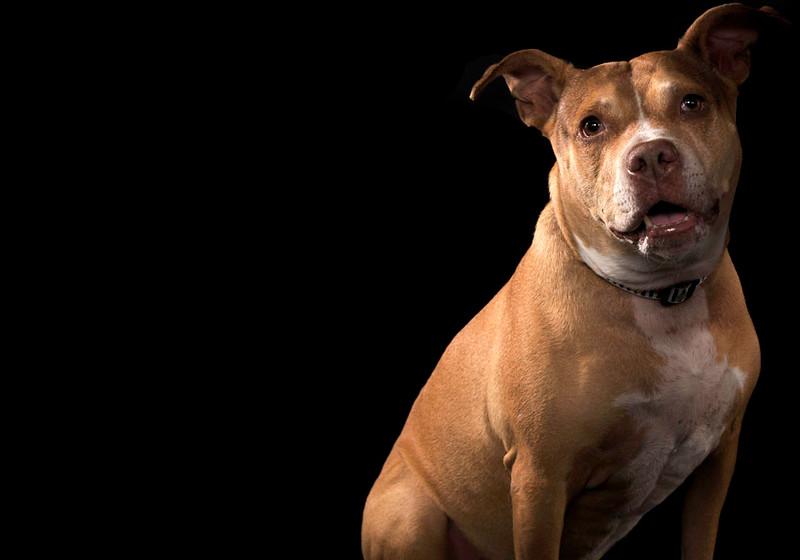 Dog8.jpg