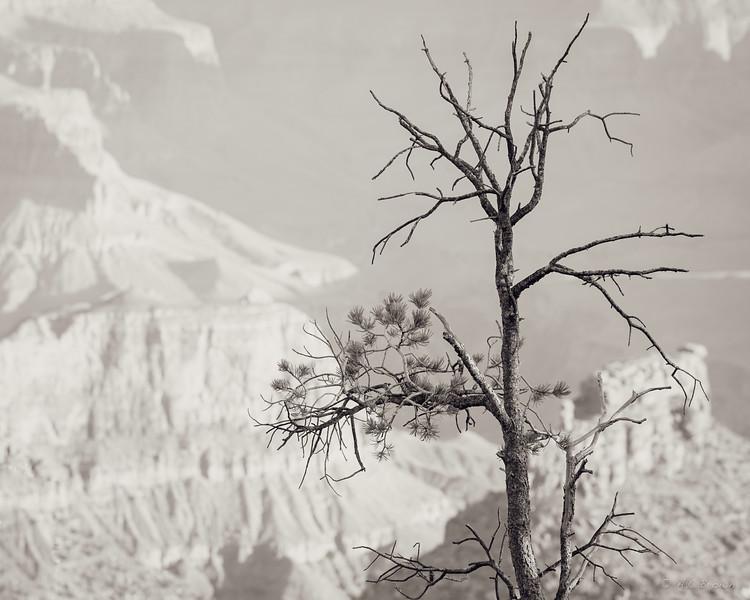 Scarecrow Canyon