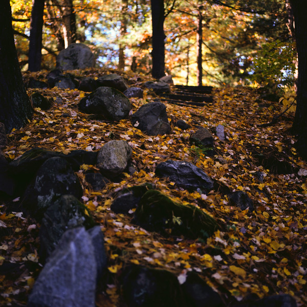 Autumn Hike 120 Film-00024.jpg