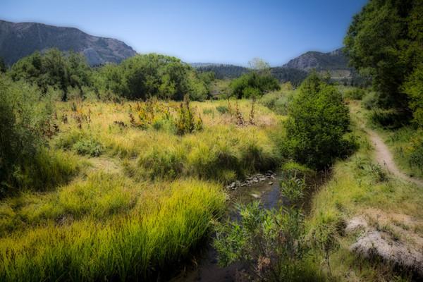August 23 - Glistening meadows.jpg